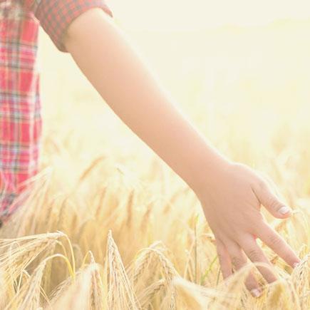 Фінансування агробізнесу